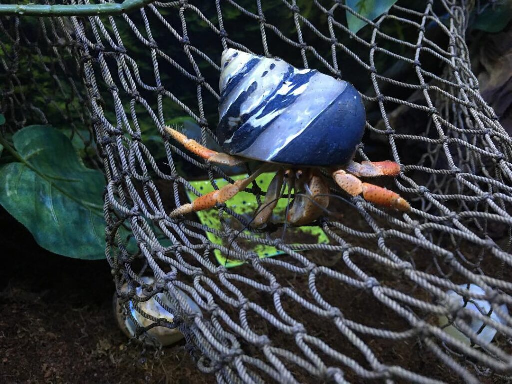 Netting for hermit crabs