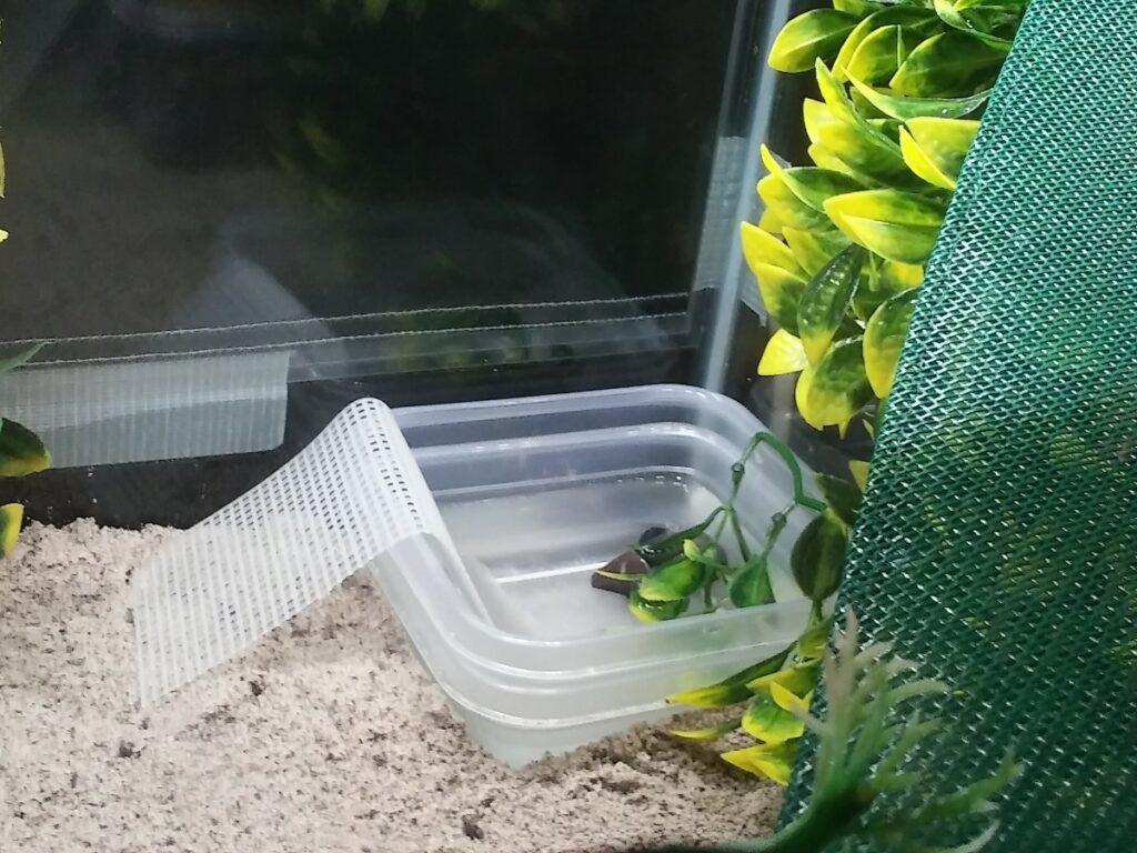 Plastic Canvas for hermit crabs