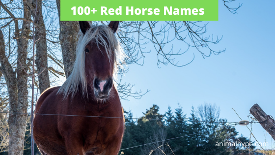 Red Horse Names
