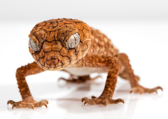 Spiritual meaning of Lizards