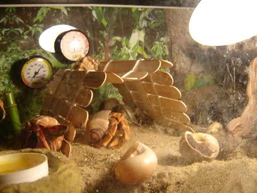 Sticks for hermit crabs