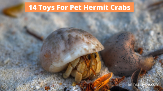 Toys For Pet Hermit Crabs