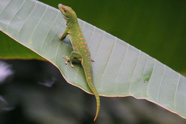 What do lizards symbolize
