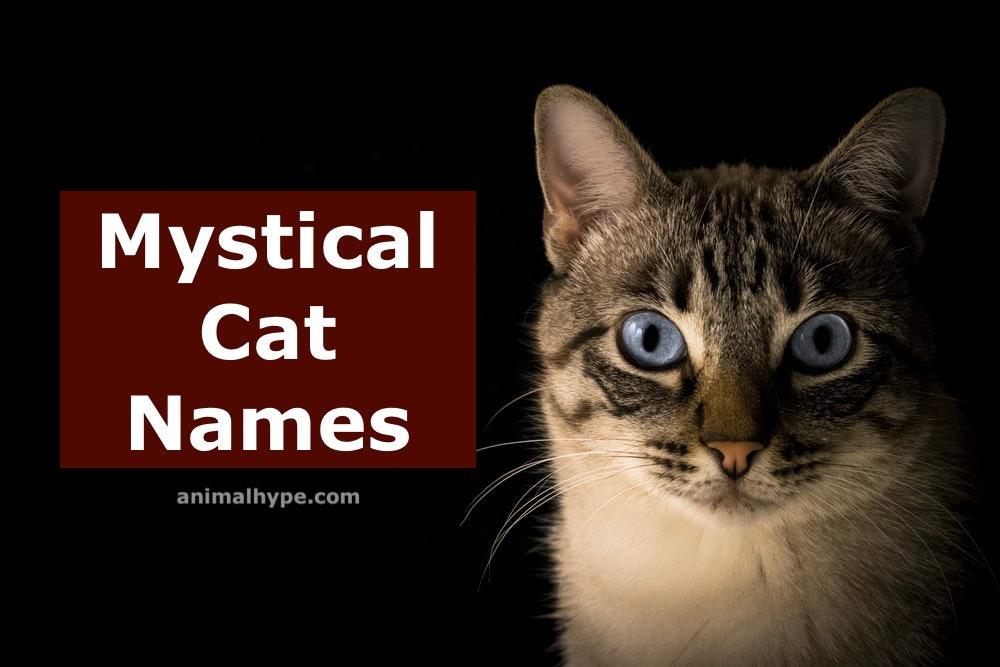 mystical cat names