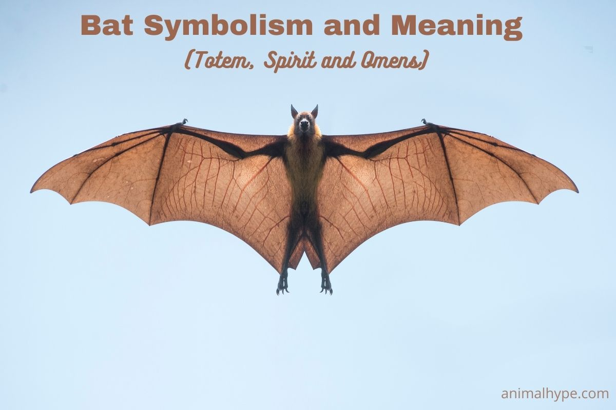 Bat Symbolism and Meaning