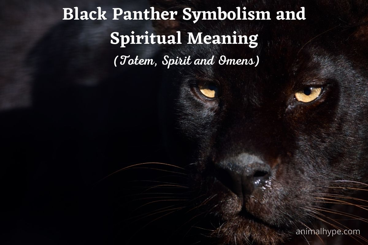 Black Panther Symbolism and Spiritual Meaning