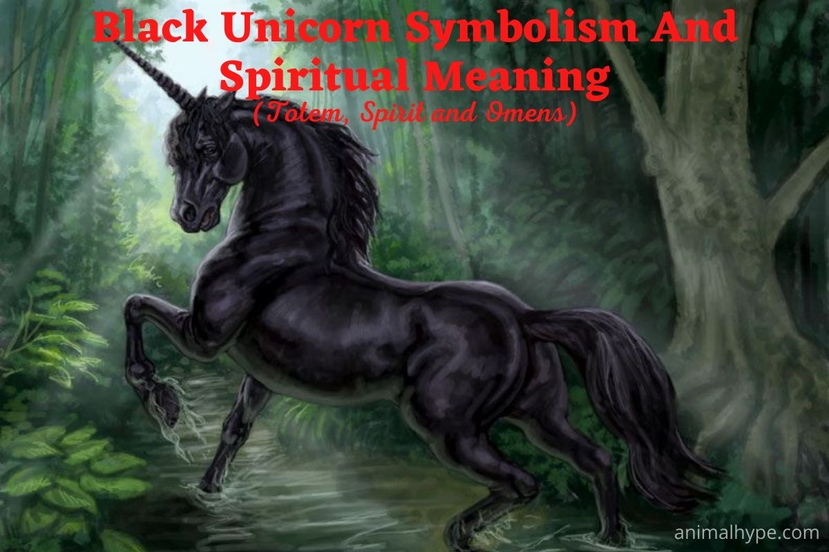 Black Unicorn Symbolism And Spiritual Meaning