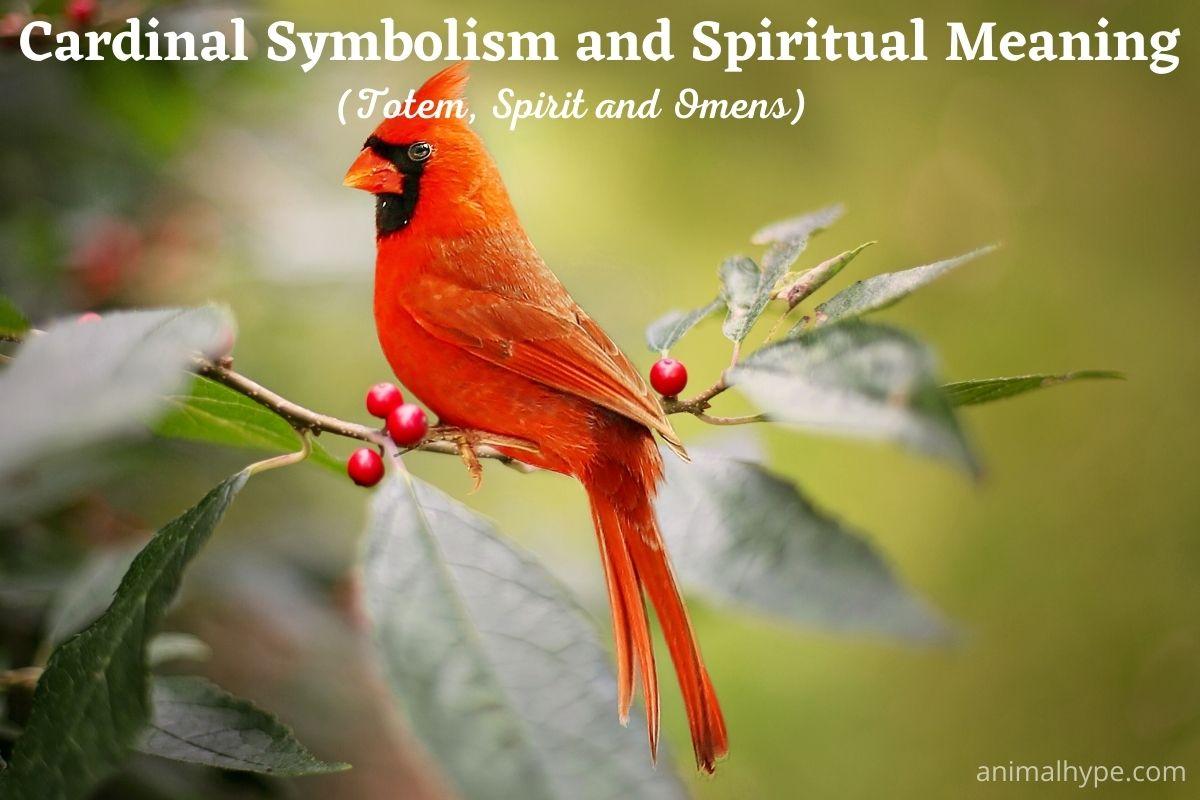 Cardinal Symbolism And Spiritual Meaning