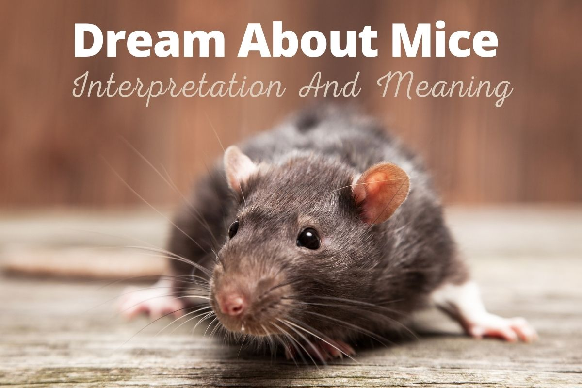 Dream About Mice