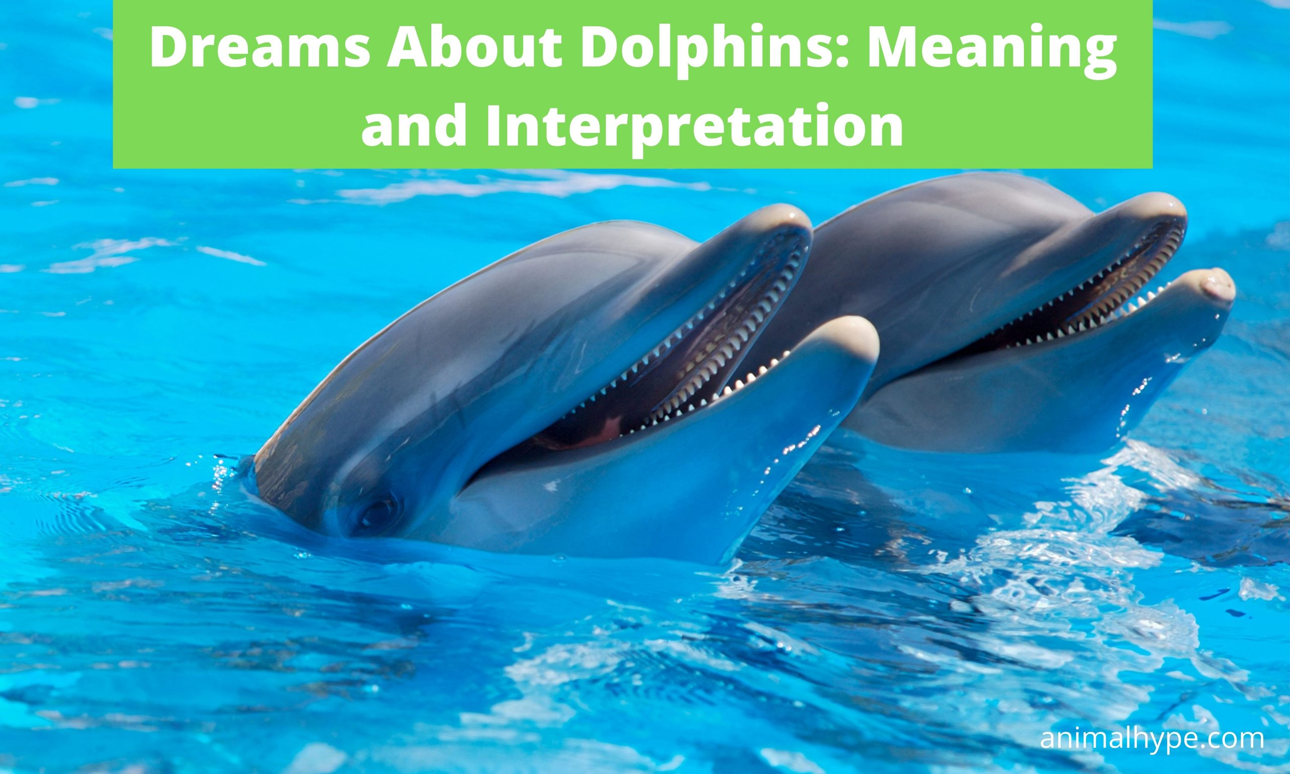 Dreams about dolphins meaning and interpretation