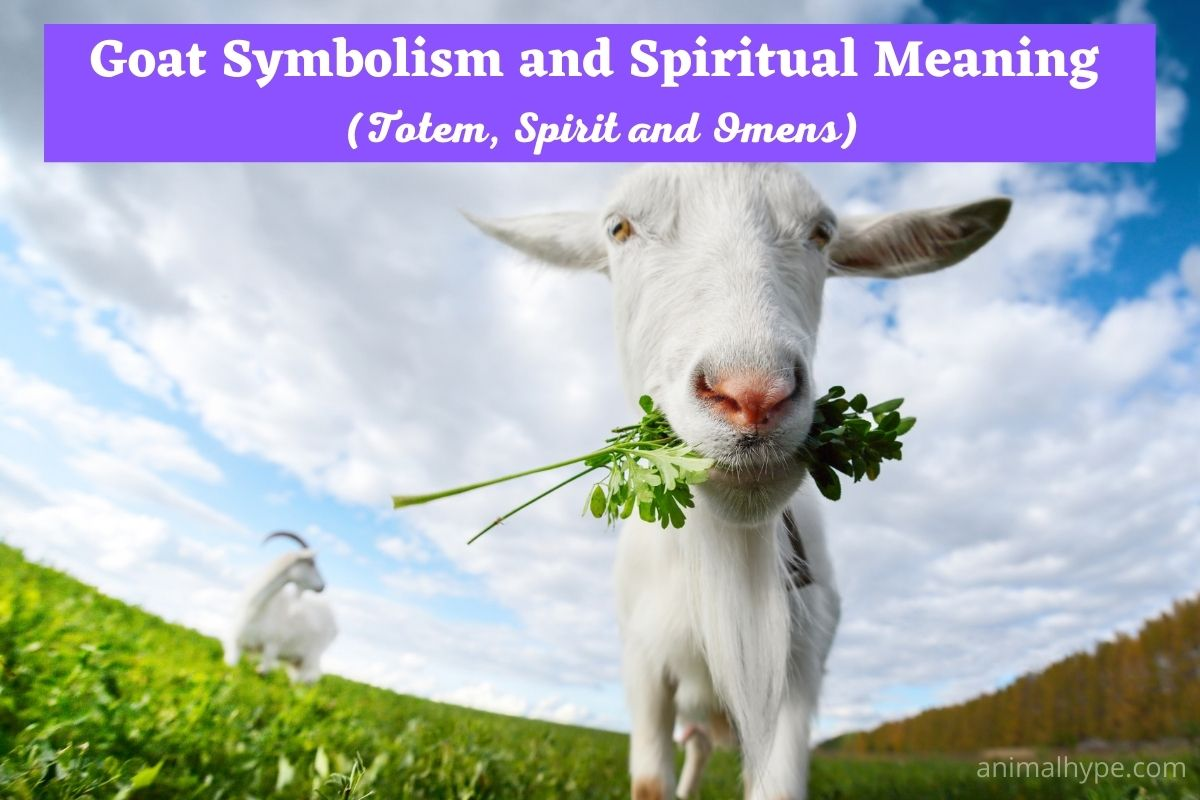 Goat Symbolism And Meaning
