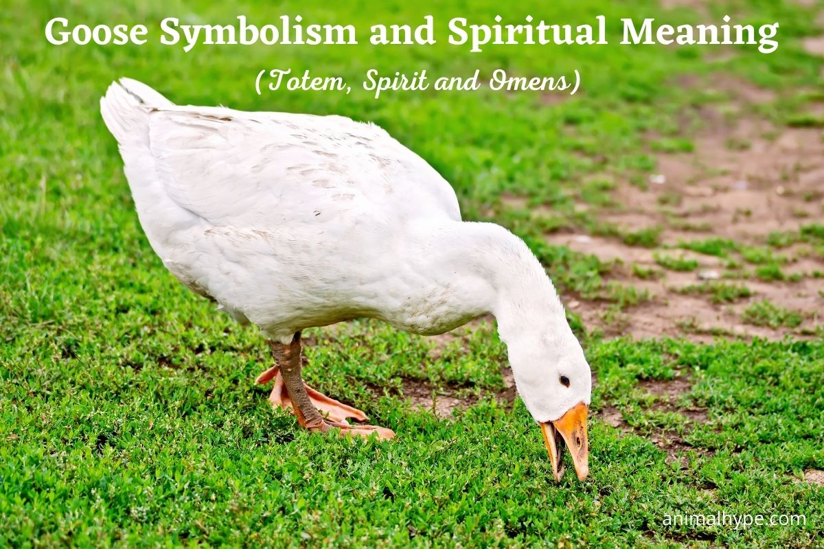 Goose Symbolism and Spiritual Meaning