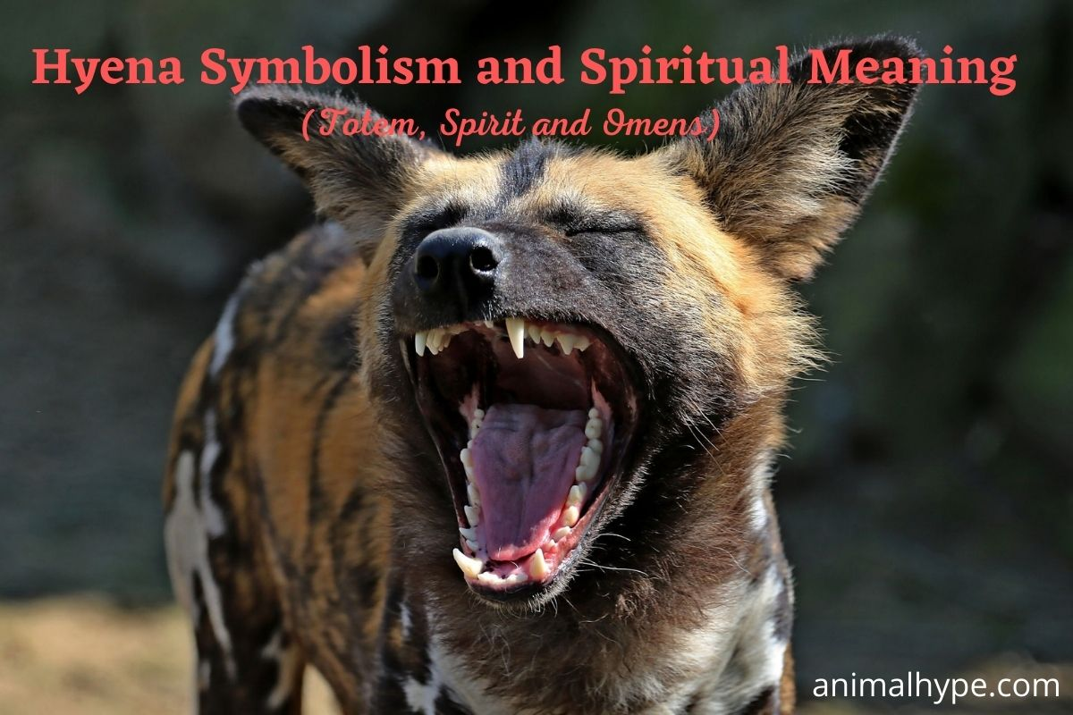 Hyena Symbolism And Meaning