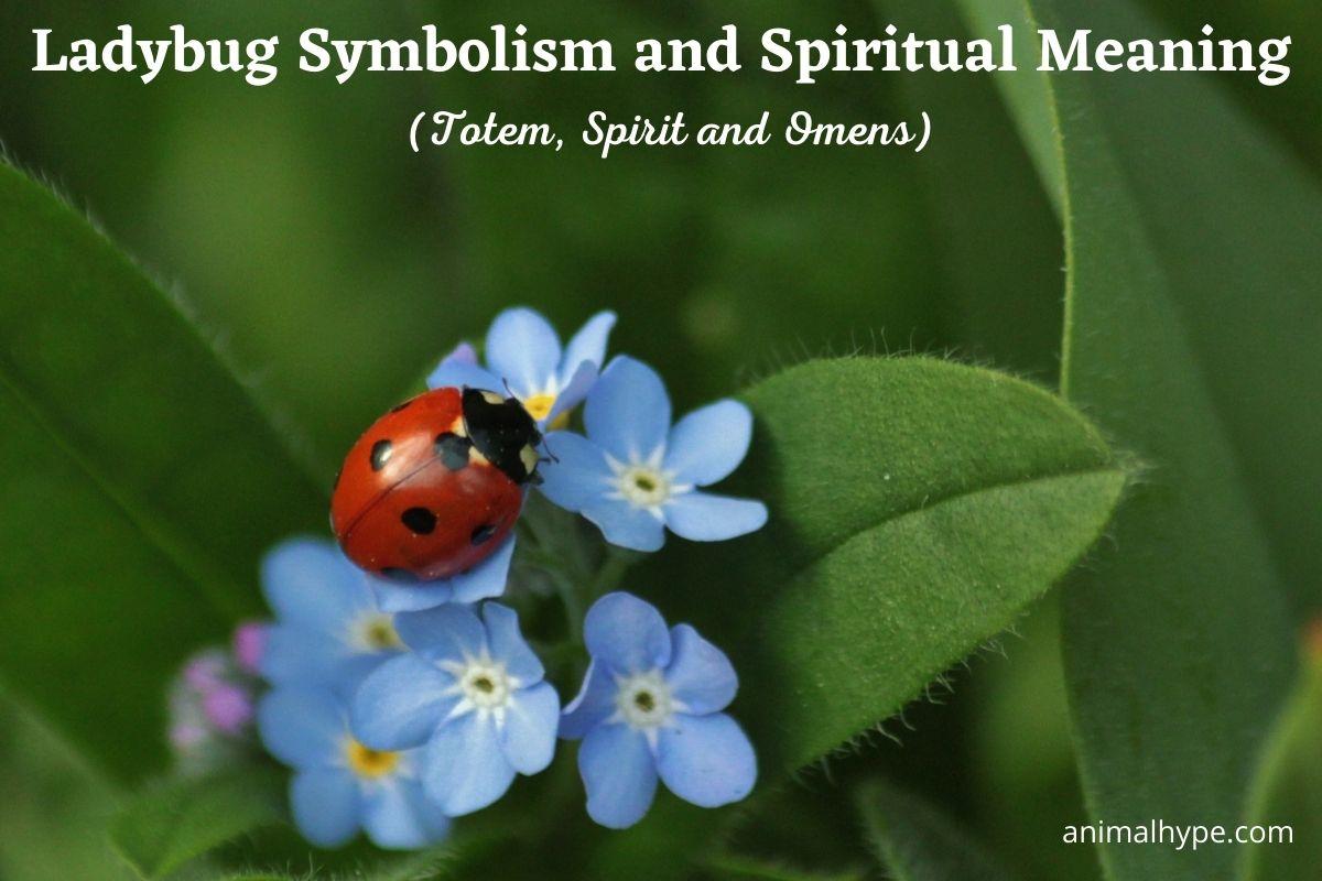 Ladybug Symbolism and Meaning