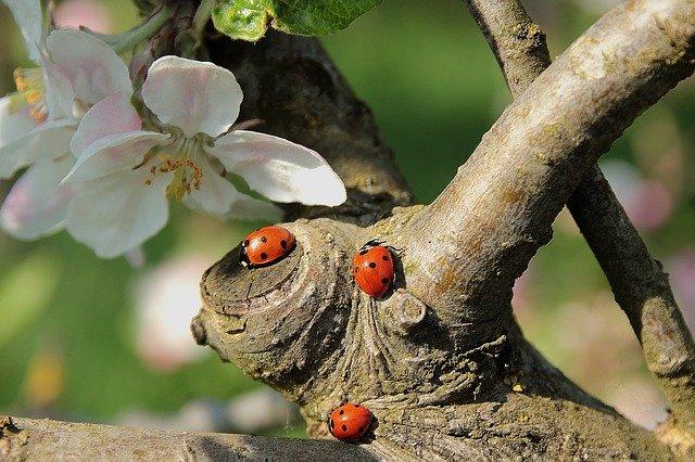Ladybugs in dream interpretation