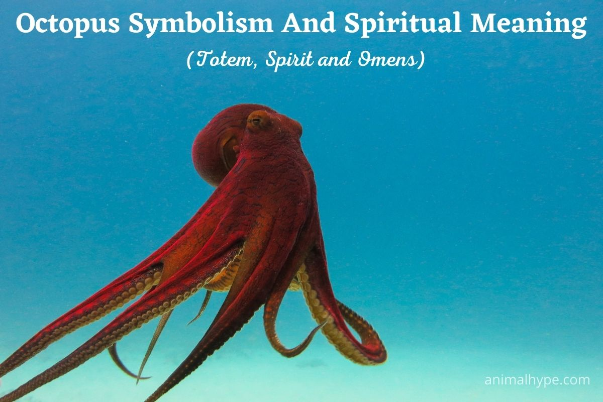 Octopus Symbolism and Spiritual Meaning