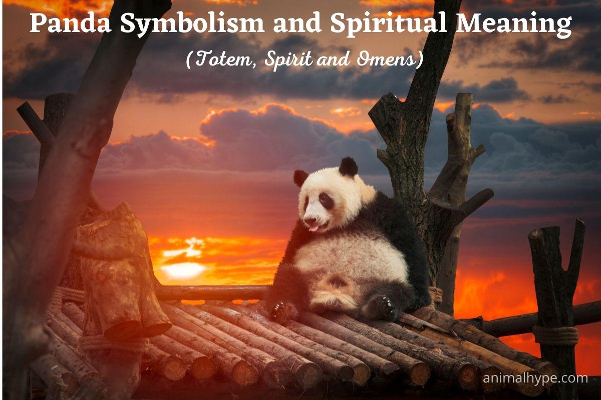 Panda Symbolism and Spiritual Meaning