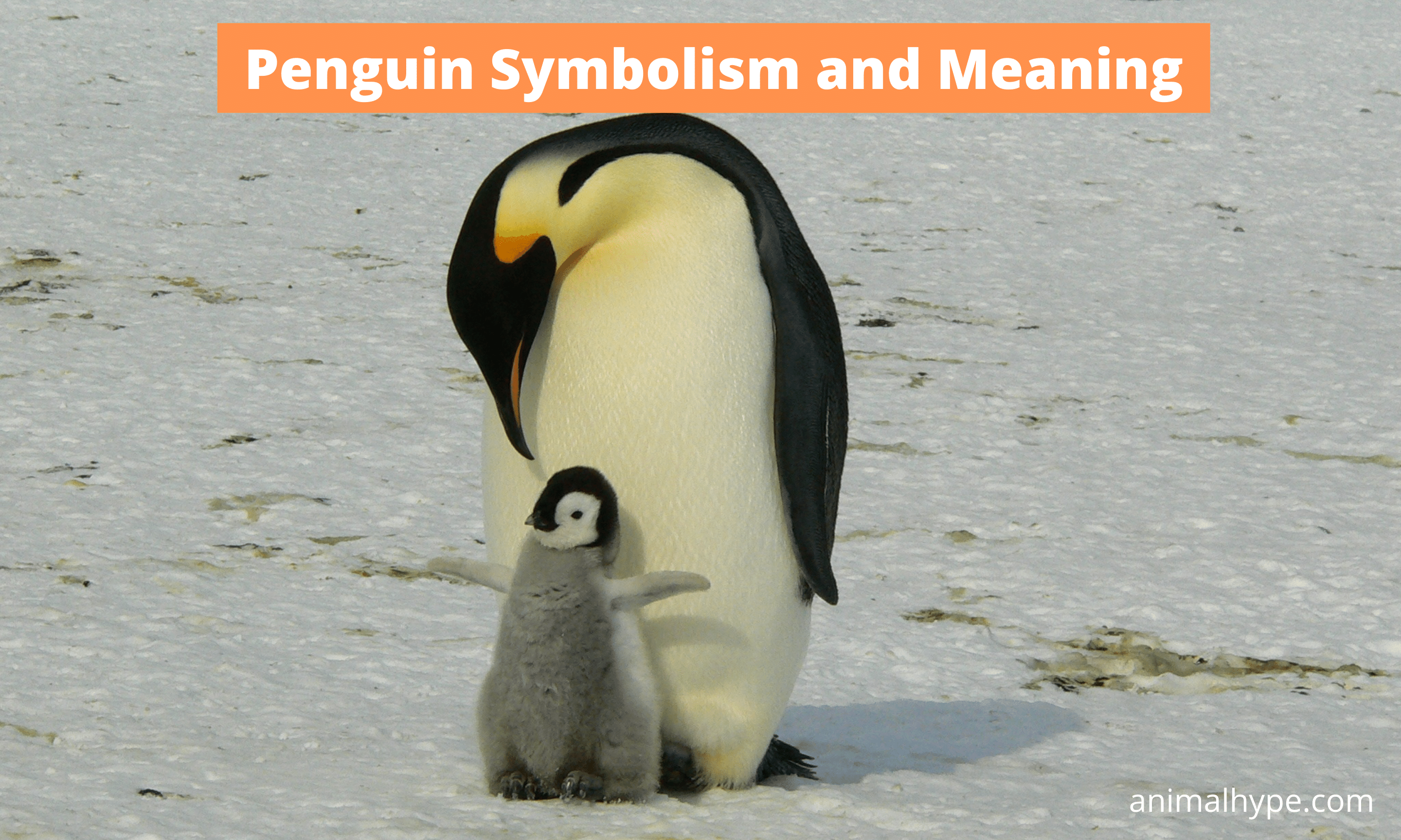 Penguin Symbolism and Spiritual Meaning