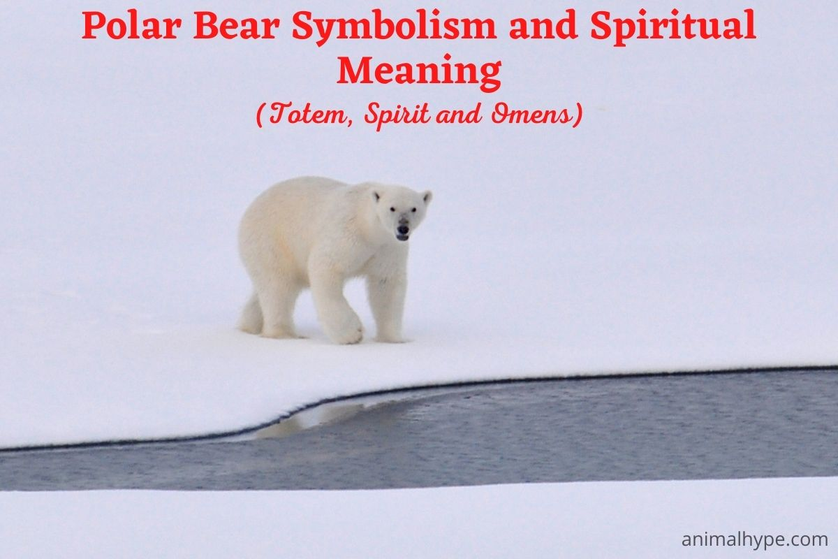 Polar Bear Symbolism and Meaning