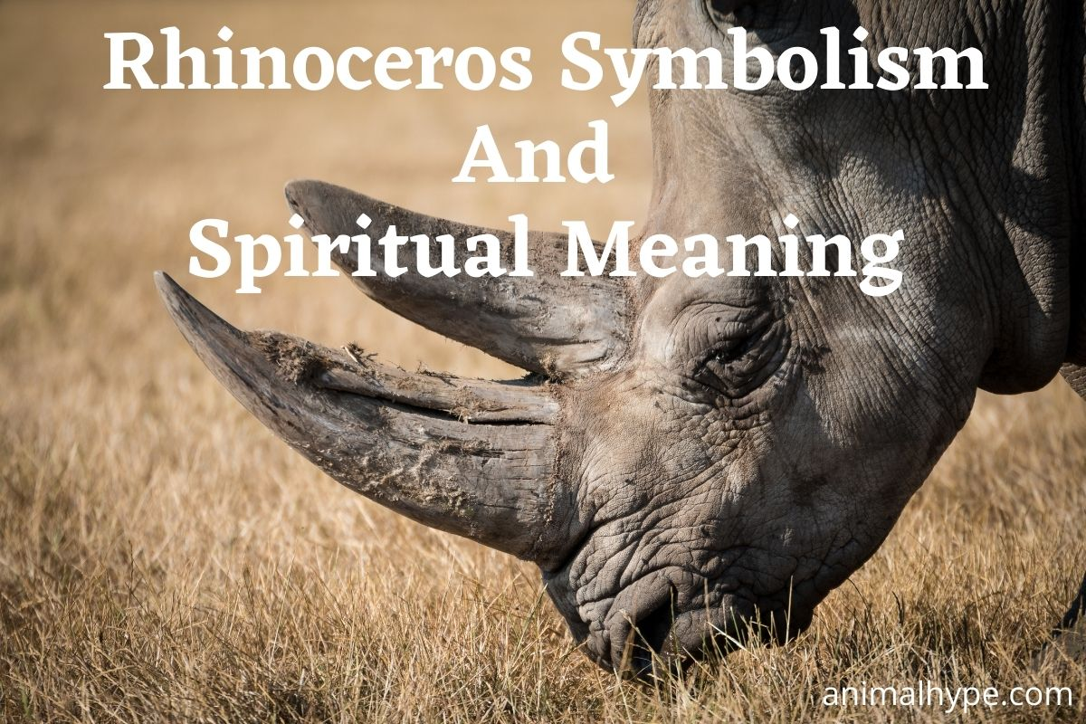 Rhinoceros Symbolism And Meaning