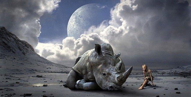 Rhinoceros in dream