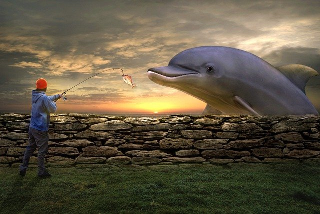Seeing a dolphin in your dreams