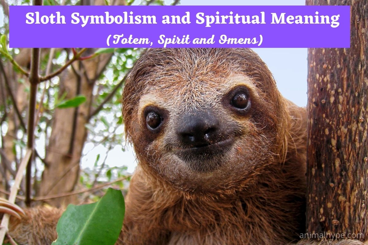 Sloth Symbolism and Meaning