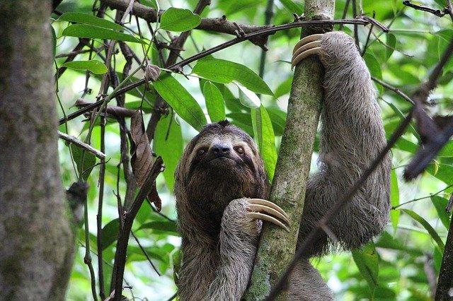 Sloth Symbolism