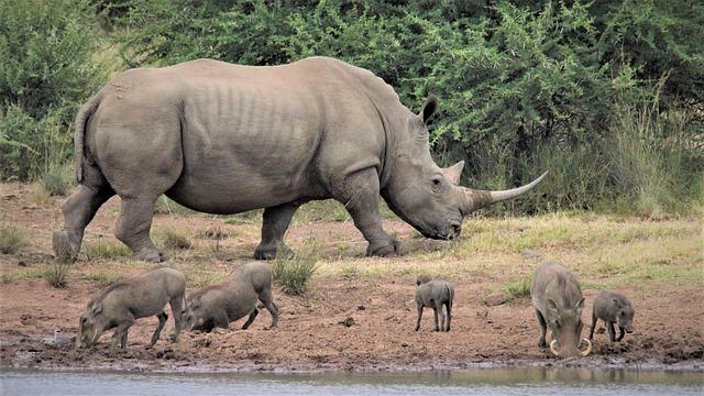 Spiritual Meaning of Rhinos