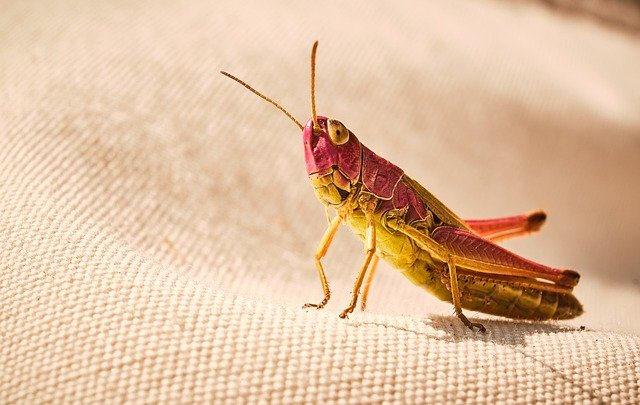 Spiritual meanings of Grasshoppers