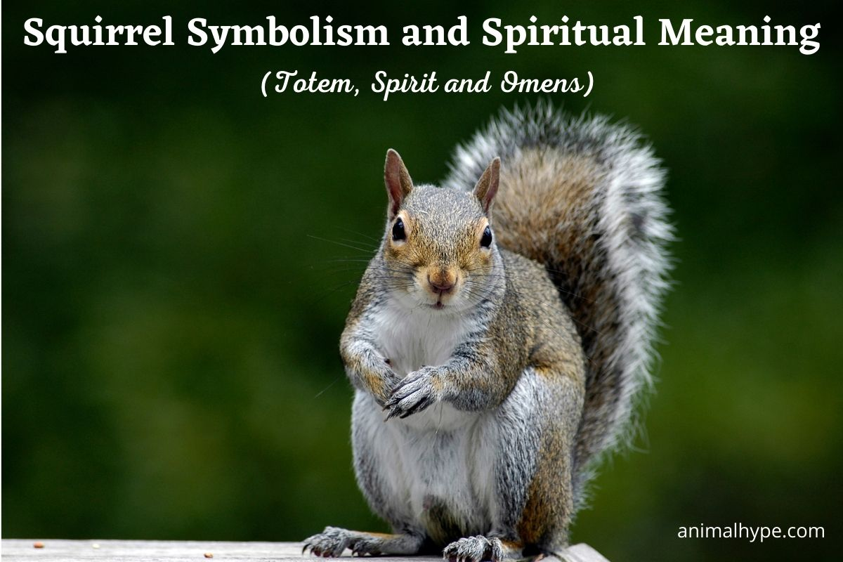 Squirrel Symbolism and Meaning