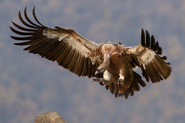 Vulture symbolism