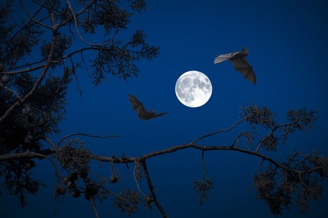 What do Bats symbolize