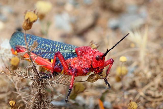 What do Grasshoppers symbolize