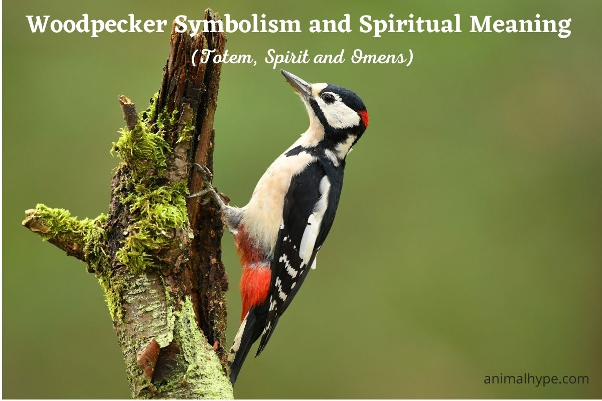 Woodpecker Symbolism and Meaning