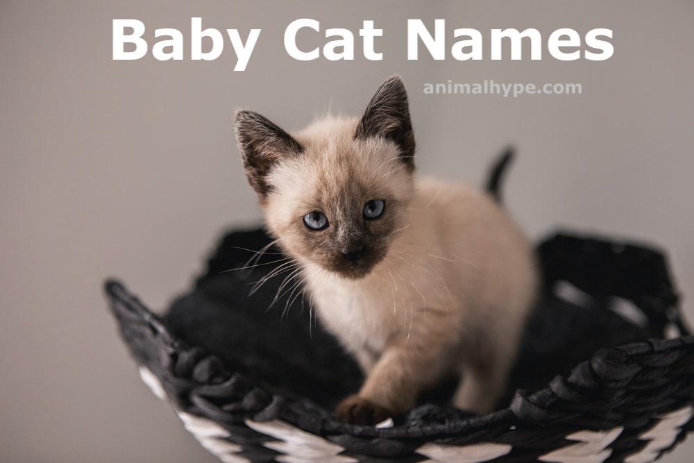 baby cat names