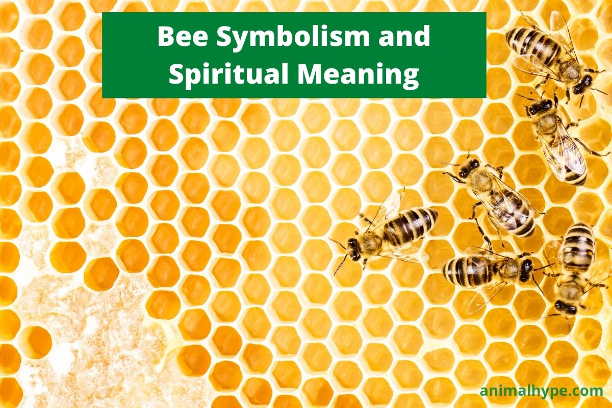 Bee Symbolism and Spiritual Meaning