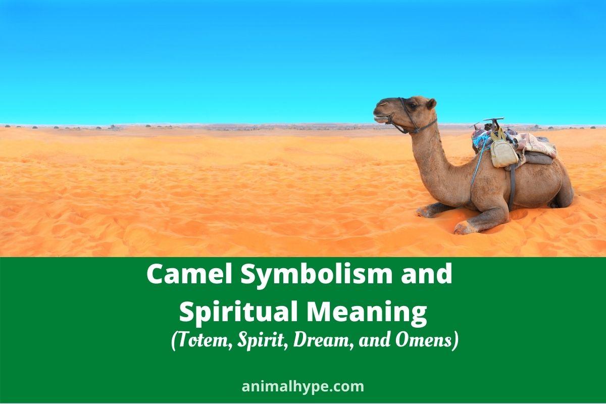 Camel Symbolism