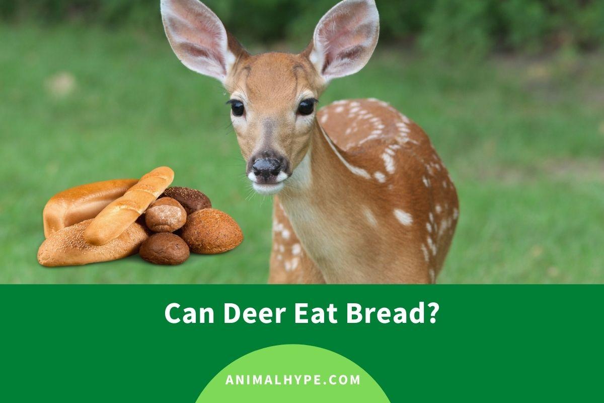 Can Deer Eat Bread?