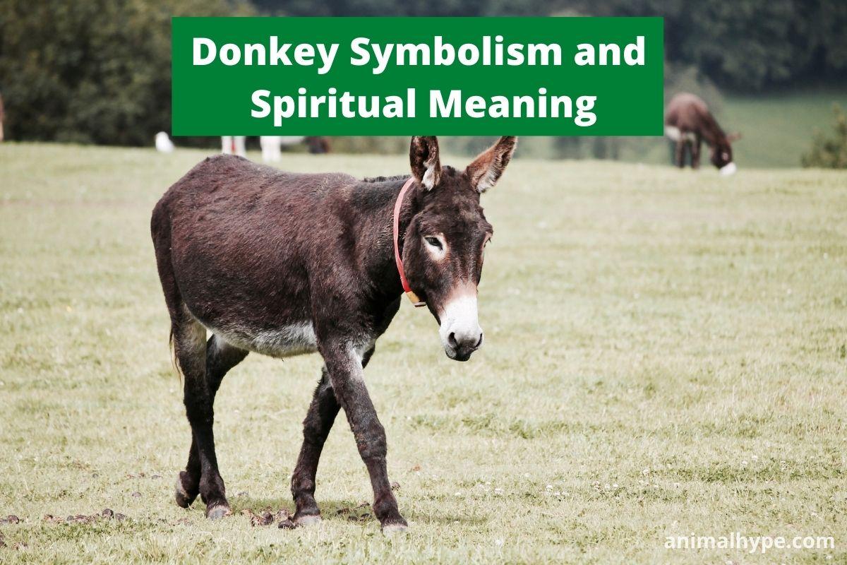 Donkey Symbolism