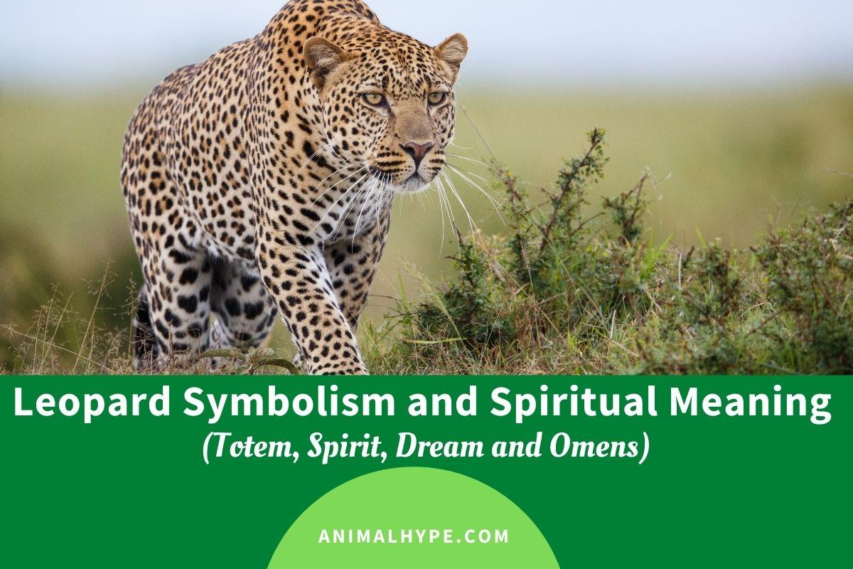 Leopard Symbolism