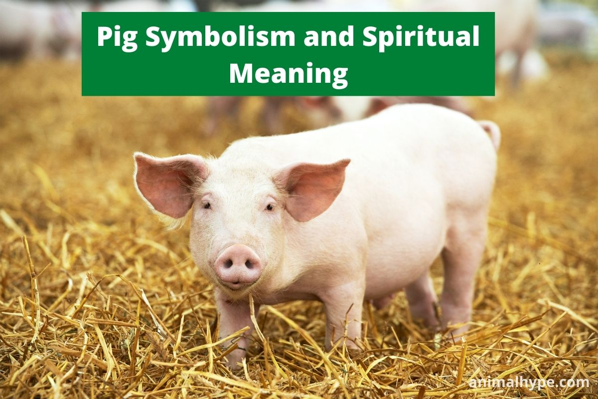 Pig Symbolism and Spiritual Meaning