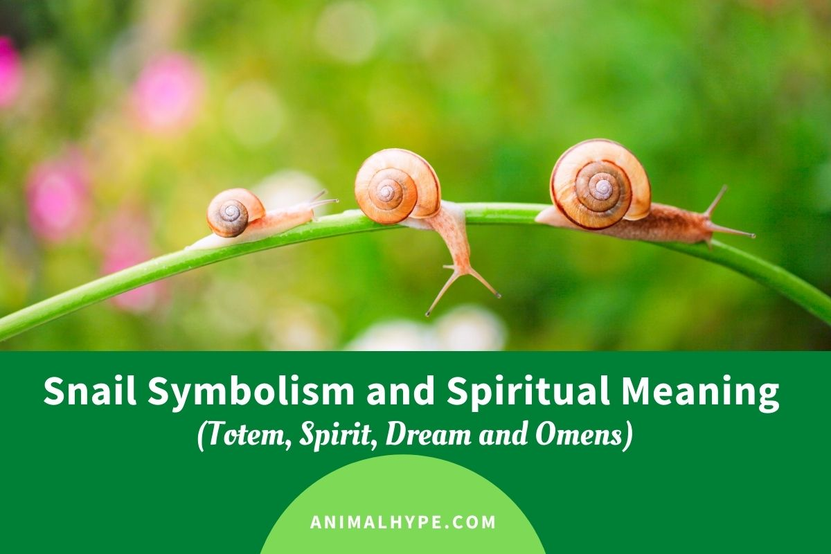 Snail Symbolism