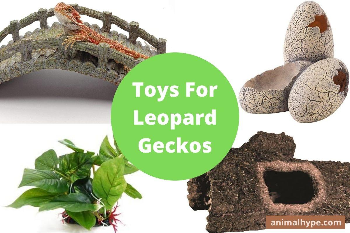 Toys For Leopard Geckos