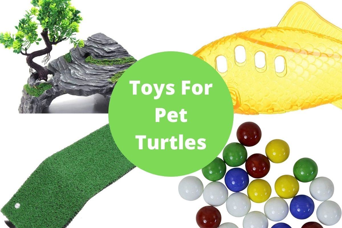 Toys For Pet Turtles