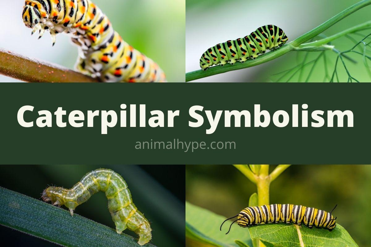 caterpillar symbolism
