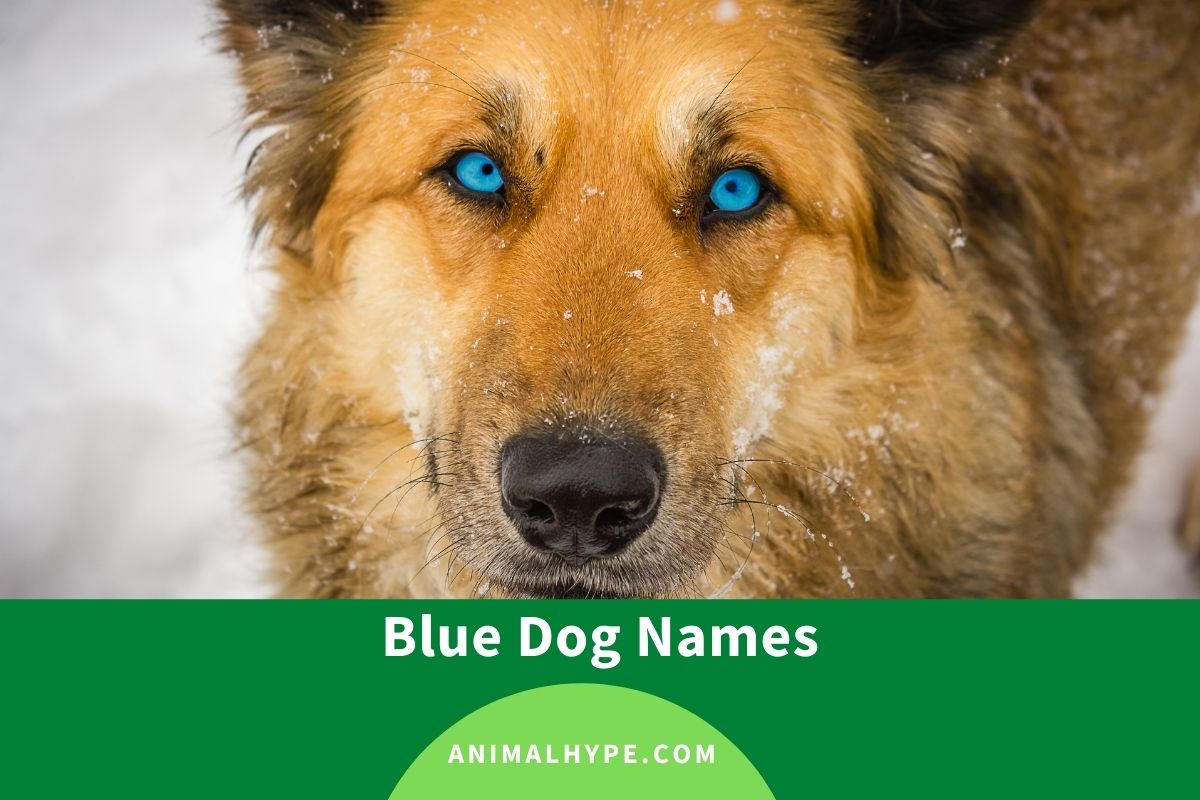 Blue Dog Names