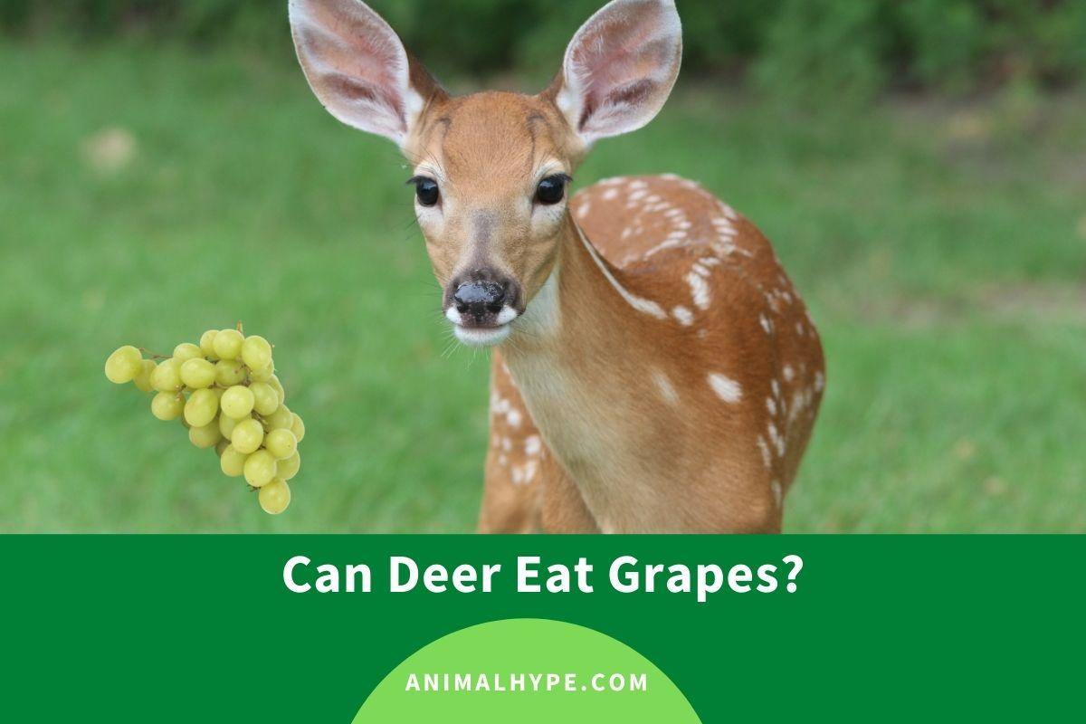 Can Deer Eat Grapes