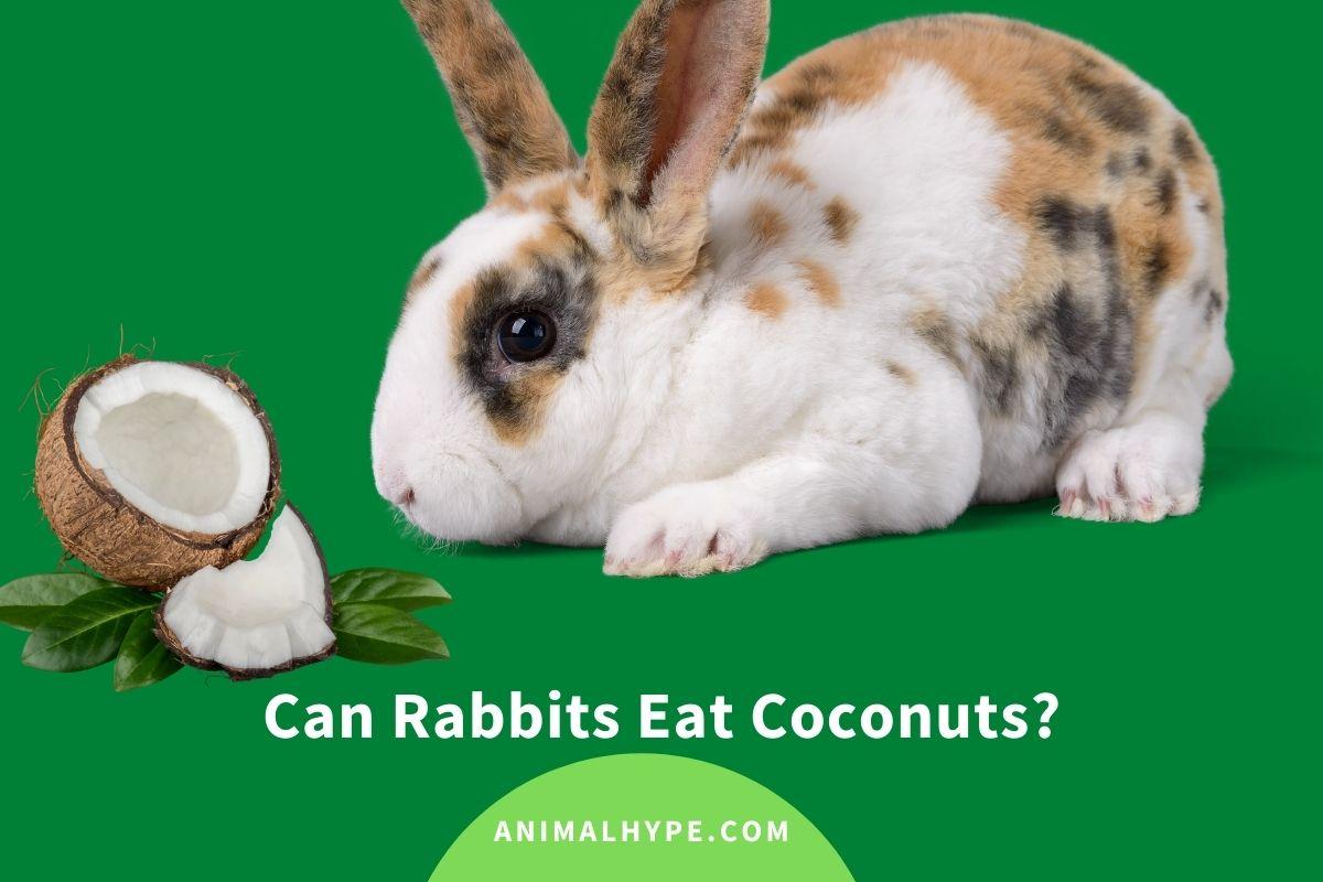 Can Rabbits Eat Coconuts