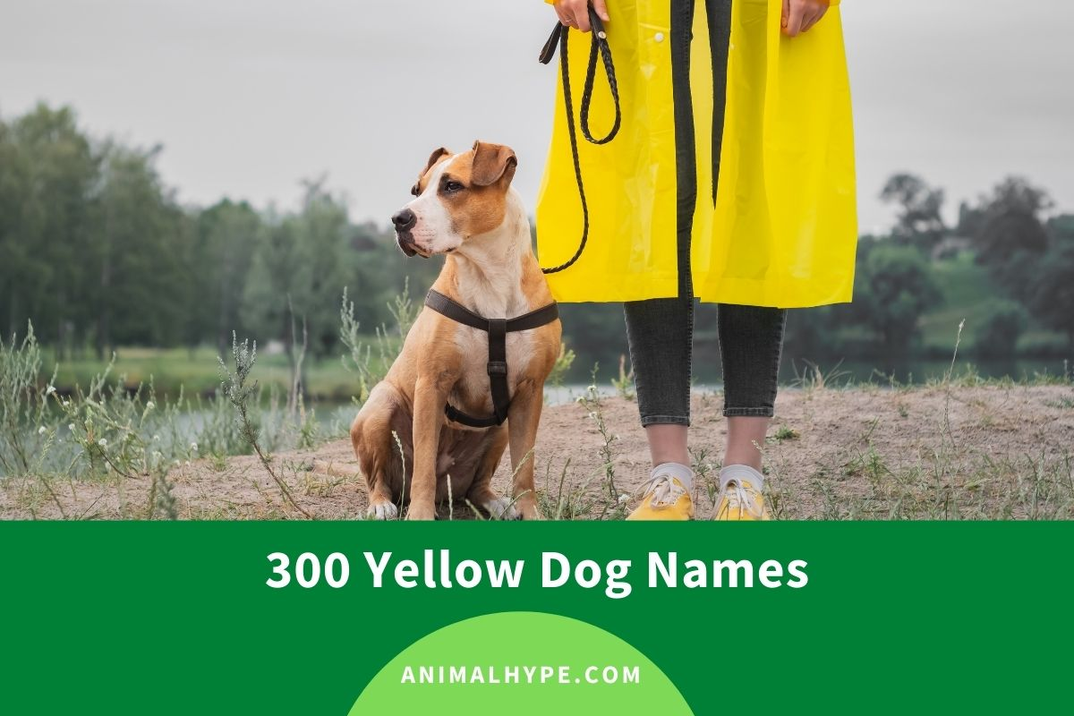 Yellow Dog Names